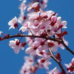 2000年代の春に聴きたい「春歌」名曲集 やっぱり春や桜がキーワード